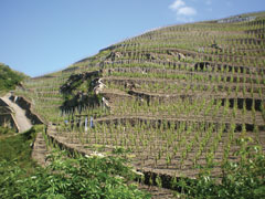 CÔTE-RÔTIE Vignobles LEVET