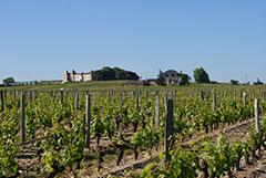 SAUTERNES Château LAFON
